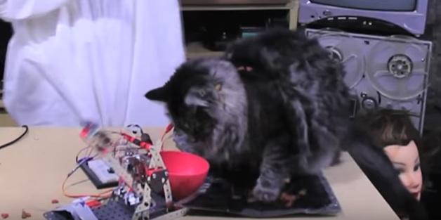 Arduino servo catapult
